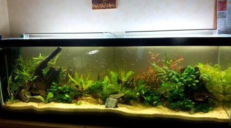 aquarium Bac Amérique du Sud