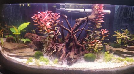 aquarium Aquarium salon