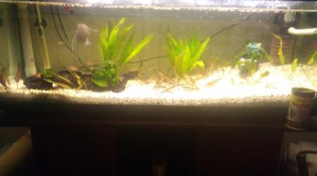 aquarium Naturelle