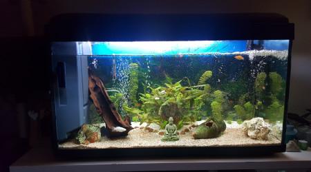 aquarium Mon 200l eau douce