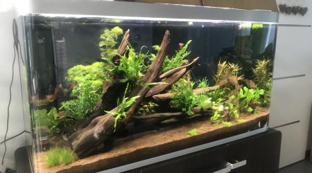 aquarium Amazonien 300L