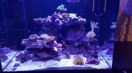 aquarium Mon RS 130