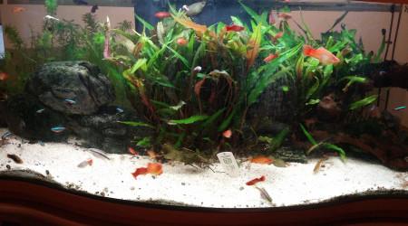 aquarium Aquarium 130L