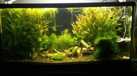aquarium Biotope Asiatique