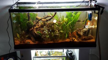aquarium 100l communautaire