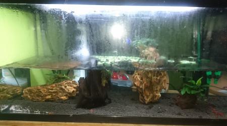 aquarium Trois
