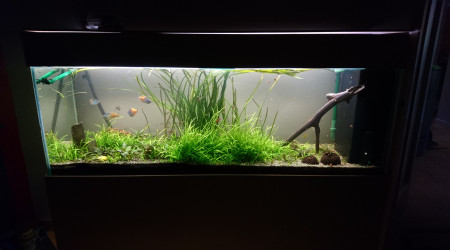aquarium un