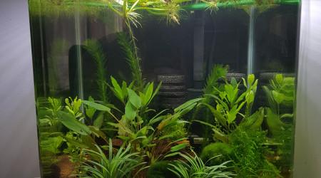 aquarium Nano 30l