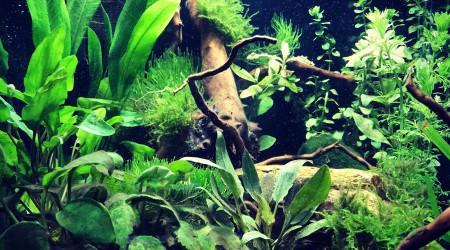 aquarium Dennerle NanoCube 30l