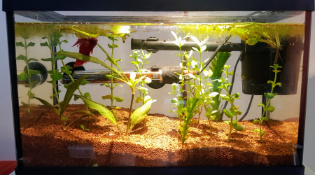 aquarium Nano 12l