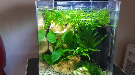 aquarium Nano bac