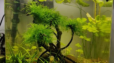 aquarium NANO   CUBE  BLACK SAKURA
