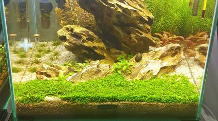 aquarium Nano scape