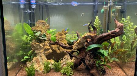 aquarium Eheim Vivaline 150