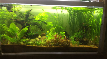 aquarium bac 320 L. communautaire