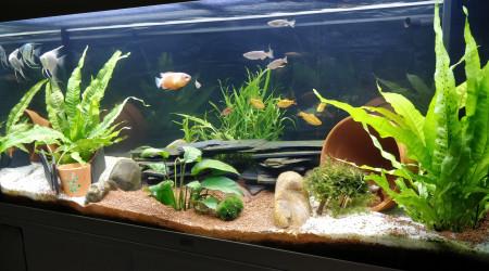 aquarium Aquarium salon 1