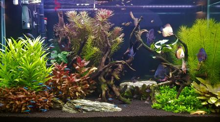 aquarium Aquarium salon 300L