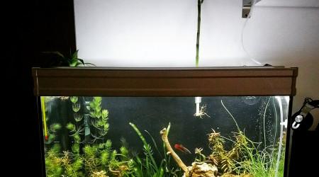 aquarium Fusion 80