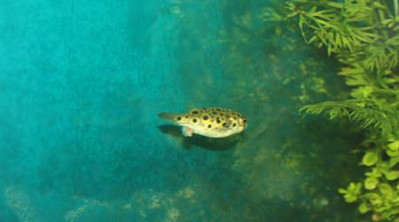 aquarium De canto