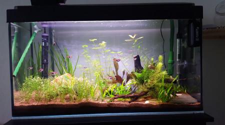 aquarium 100l Asiatique