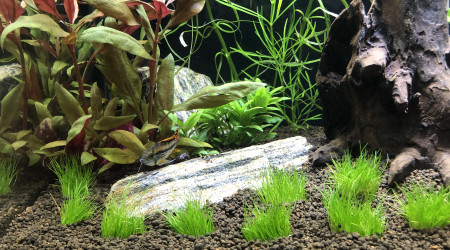 aquarium 1er biotope Amazonien