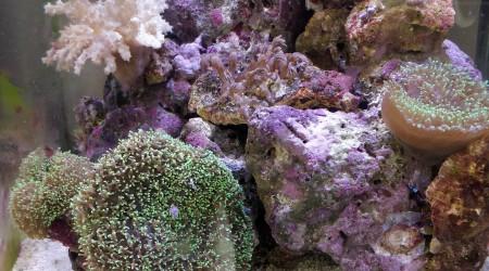 aquarium 30L Reef