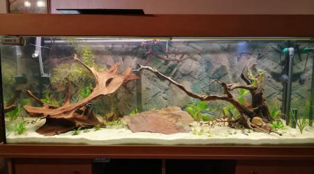 aquarium Gd Aqua