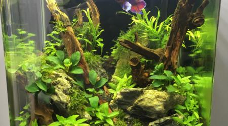 aquarium Forest Tank 30L