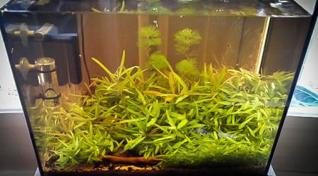 aquarium 20L  terre de bruyère