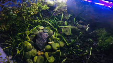 aquarium bassinarium