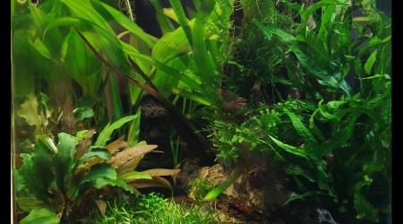 aquarium Nano 20 litres