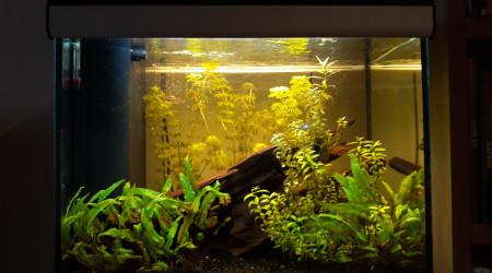 aquarium Amazonien