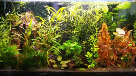 aquarium rami