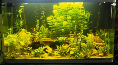aquarium Osaka 260