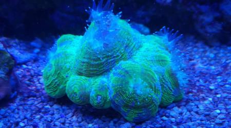 aquarium 200L Jaubert