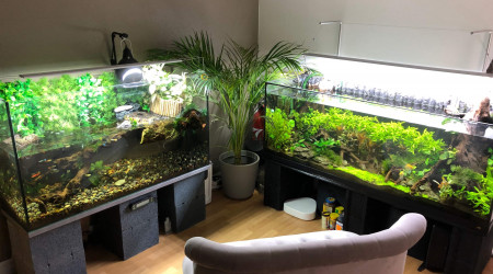 aquarium Forest river