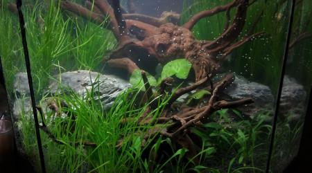 aquarium aqua bois