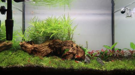 aquarium Aquascape 70L