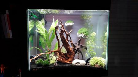 aquarium 4-3