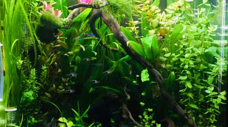 aquarium Amazonnien
