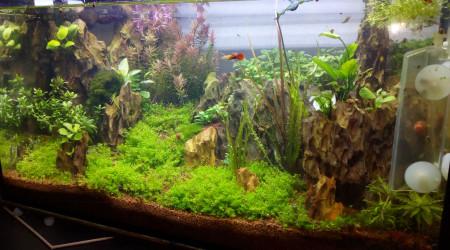 aquarium 60 L