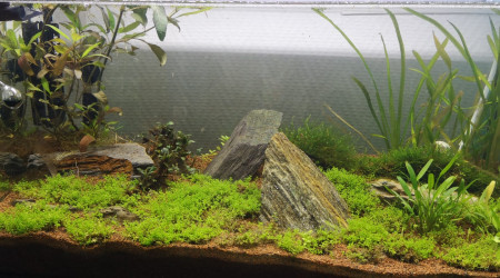 aquarium 60l spe full blue rili