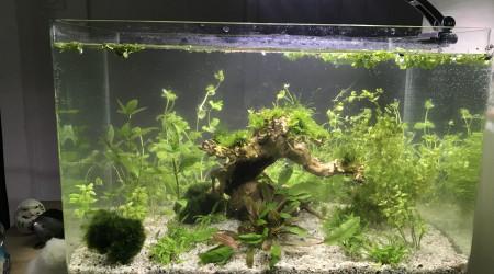 aquarium aquarium crevettes