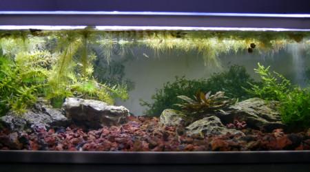 aquarium Macrobrachium - 21L