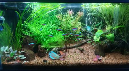 aquarium Bac communautaire