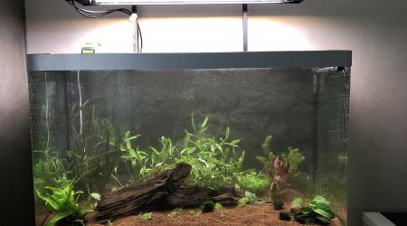 aquarium Amérique du Sud