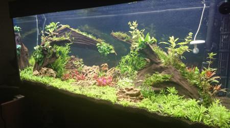 aquarium Juwel rio 180