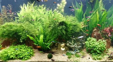 aquarium Rio 450