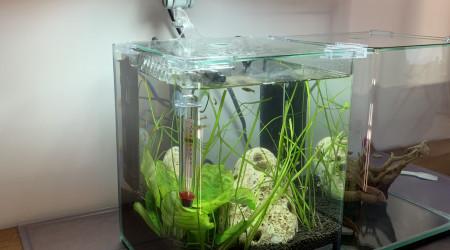 aquarium 10l Dennerle