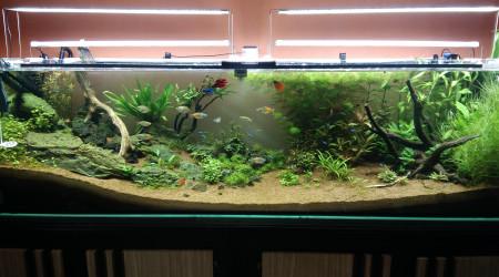 aquarium 720L